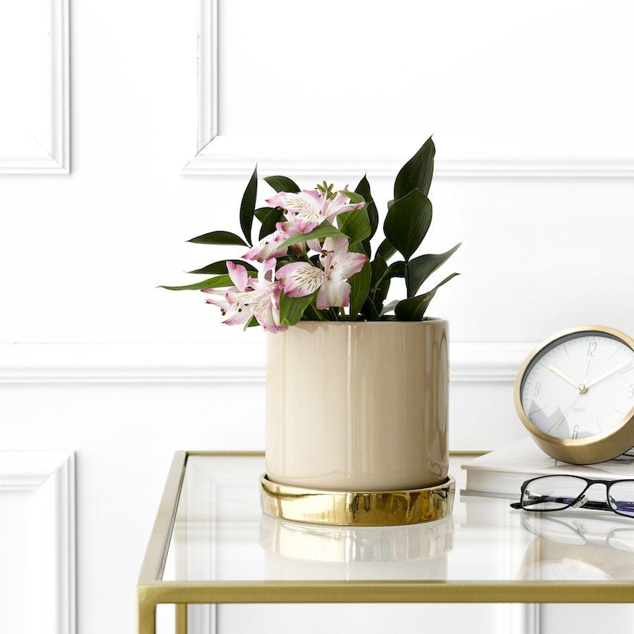 Denn vaso natural