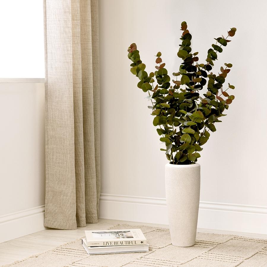 Royal eucalyptus 120