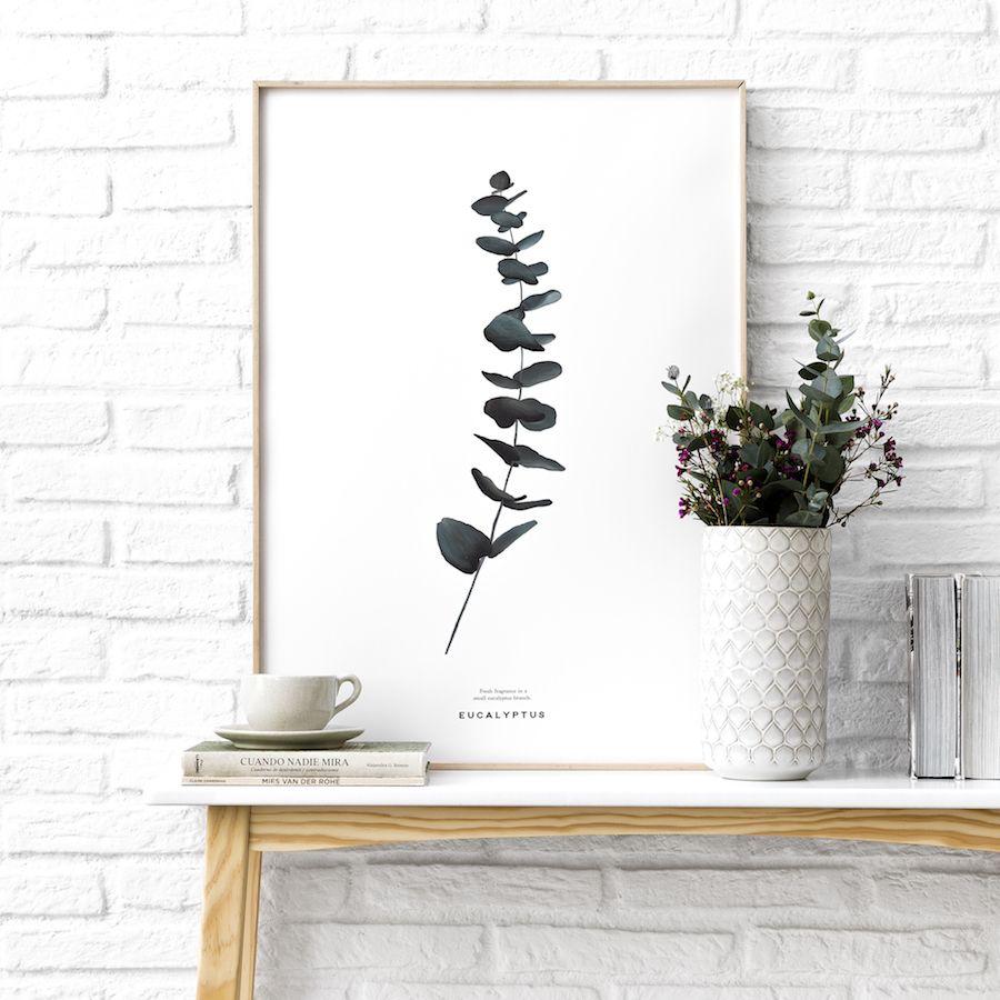 Natura Eucaleptus lamina